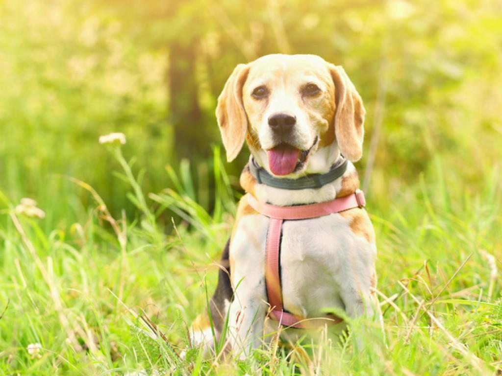 9 ok, amiért megéri fából készült kutyaházat választani – 2. rész