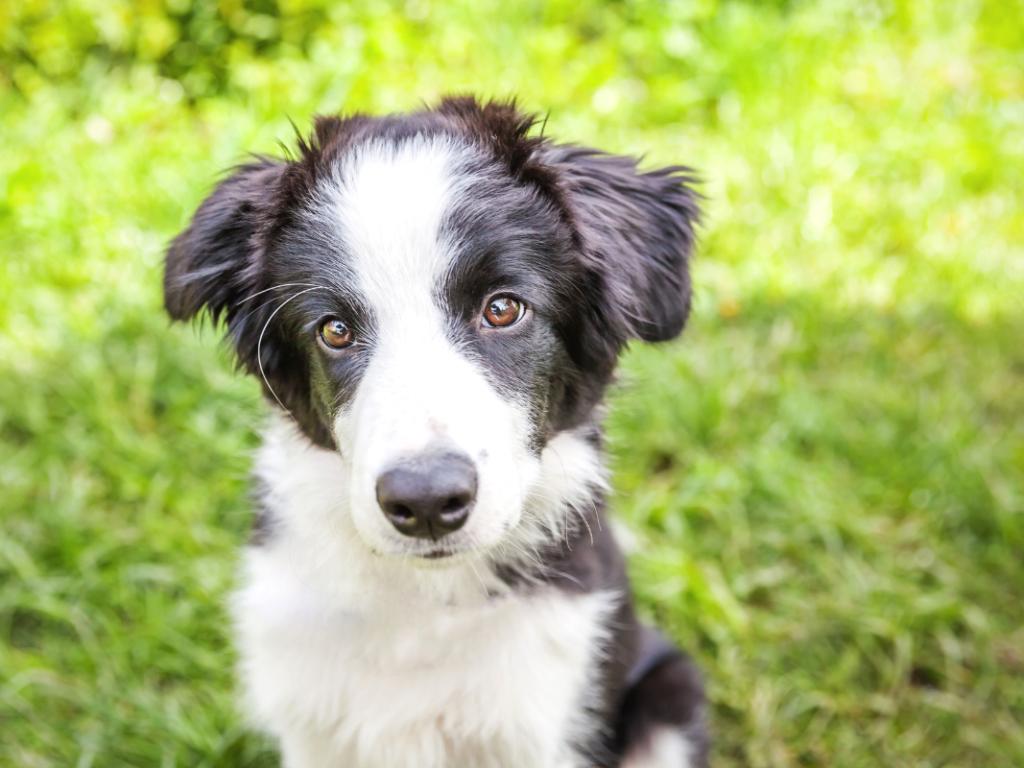 2 új választható extra a Számel kutyaházakhoz, amikre a Te kutyusodnak is szüksége lehet