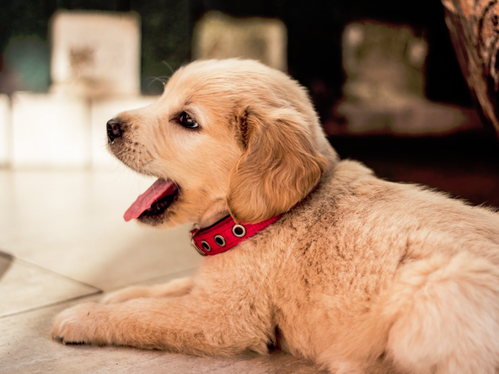 3+1 ok, amiért kedvenced imádni fog egy napozó teraszos kutyaházat