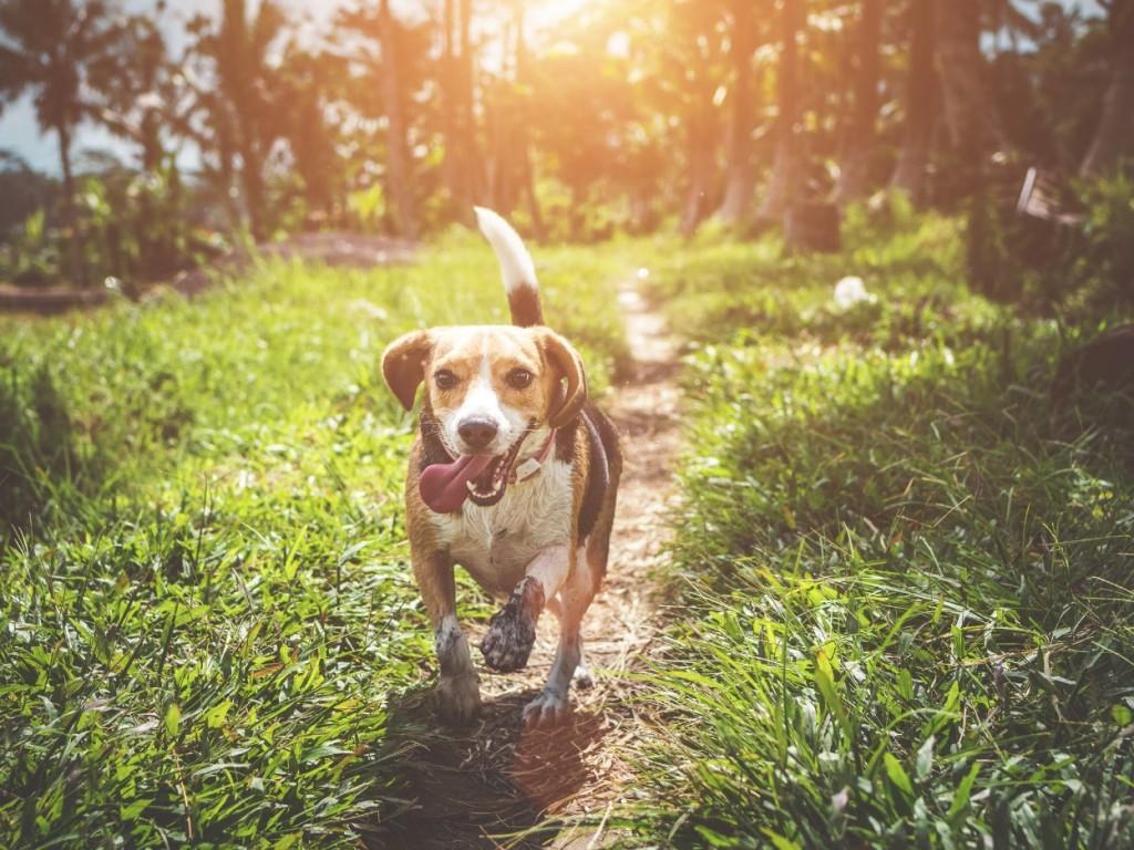 5 óriási hiba, amibe sokan belefutnak a kutyaház vásárlásakor