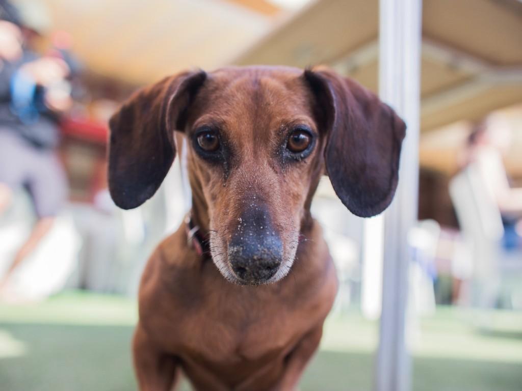 5 tévhit, amiről jó tudni az igazat, mielőtt kutyaházat választasz