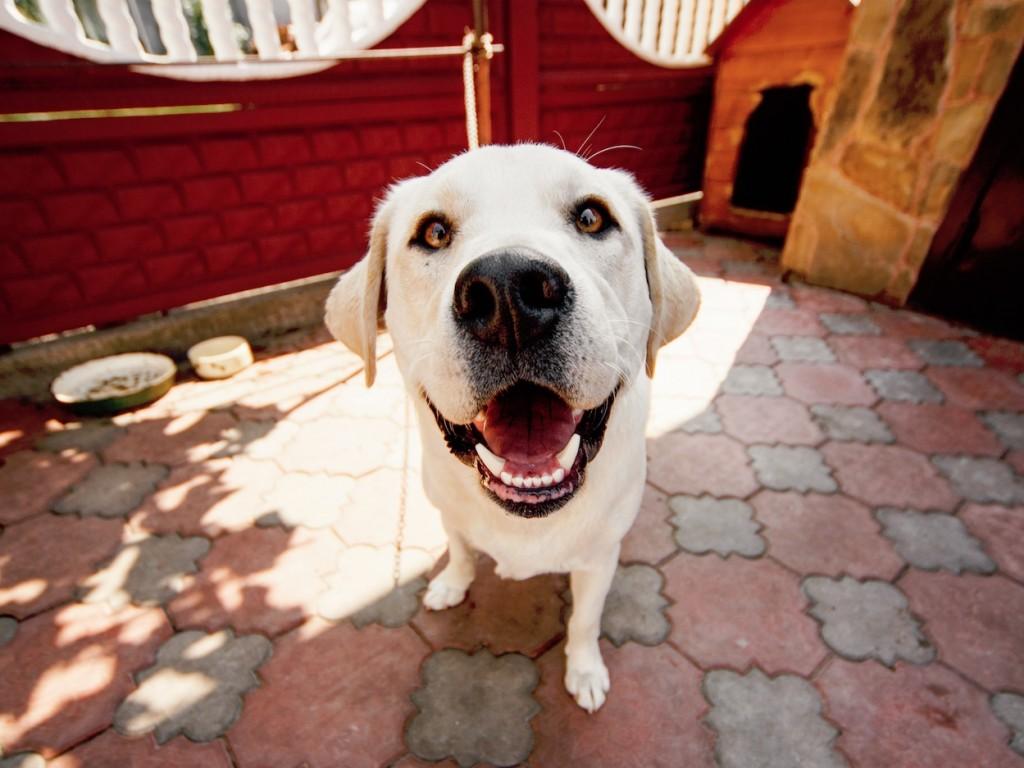 Hogyan válasszak kutyaházat? 9 fontos szempont + hasznos tanács