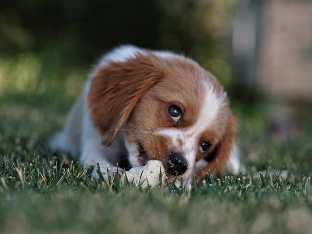 Mekkora kutyaházat válasszak? – Amit mindenkinek tudnia kéne az ólak méretéről
